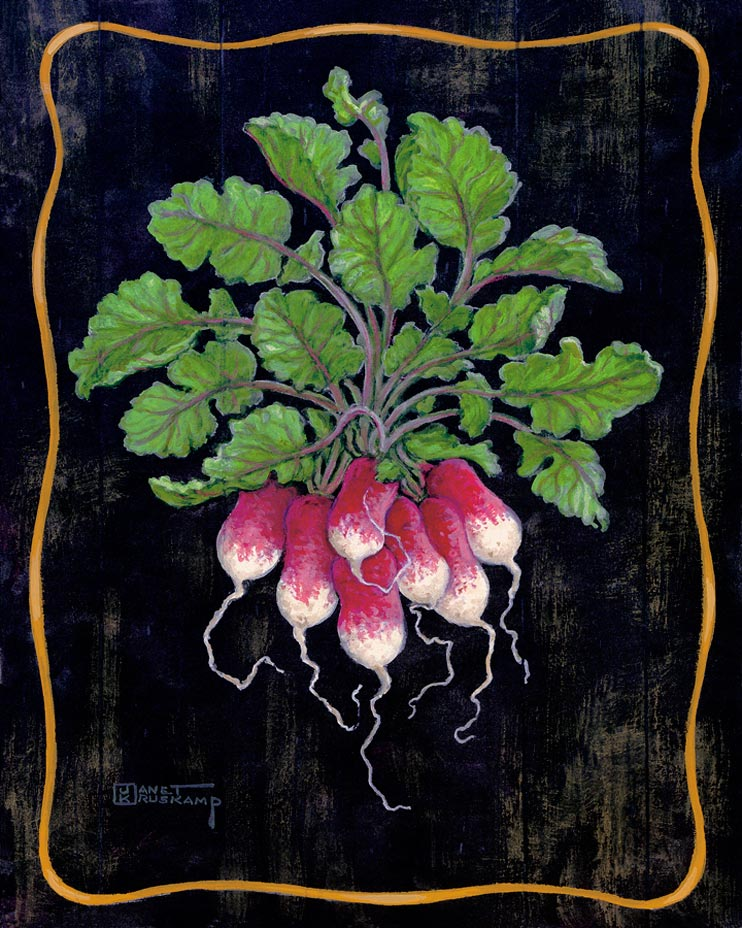 Burgundy and white made these radishes full of life. The darker background and gold border make the green leaves of the vegetable bouquet really stand out. This original paintings  is beautiful as an individual or as part of the set. Hand by Janet Kruskamp.