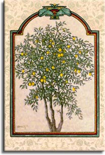 Janet Kruskamp's Paintings - Classical Lemon, an original oil painting depicting a delicate lemon tree bearing ripe fruit. A dimensional frame with a decorated rounded top is bounded to the edge of the painting by a light floral patterned background. One of the Still Lifes Gallery of Original Oil Paintings and  original paintings by Janet Kruskamp